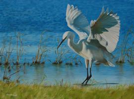 Little Egret at Elmley by huckerback6
