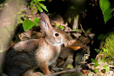 Thumper by mozella78