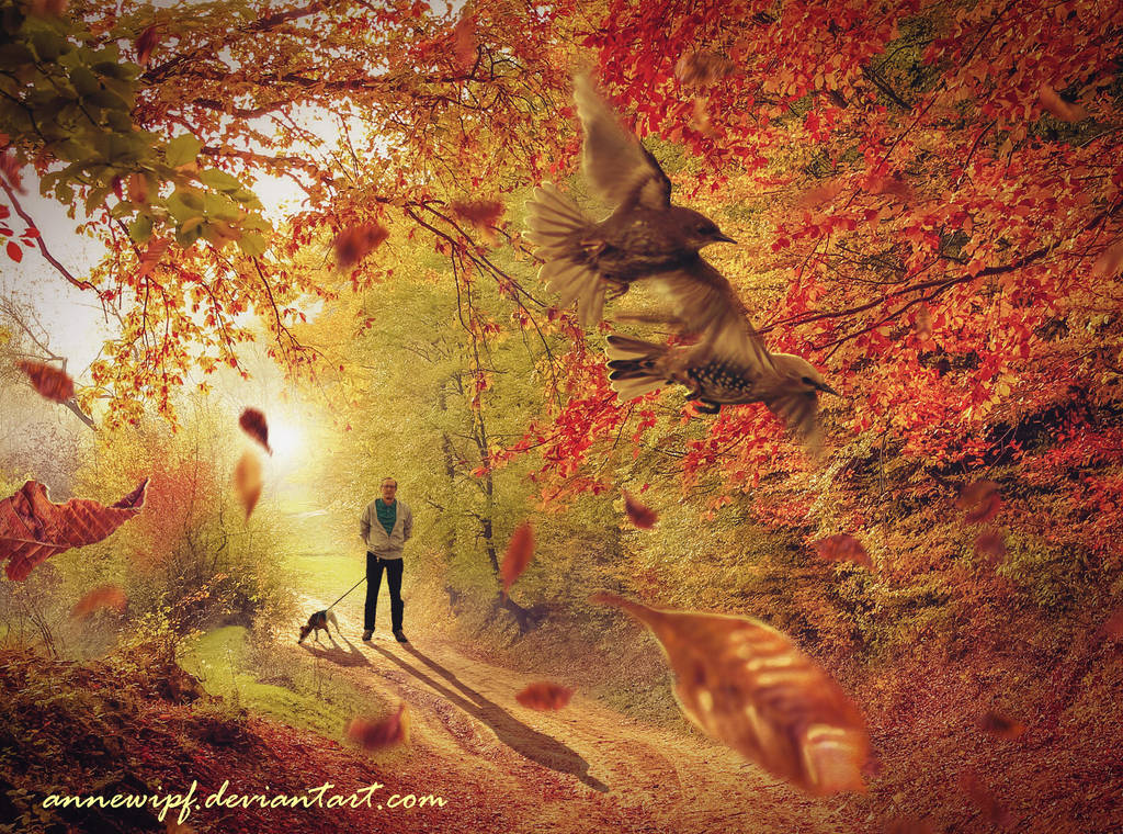 Golden Morning Walk by annewipf