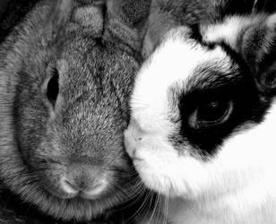 Rabbit kisses by xKaTiEMoNsTeRx