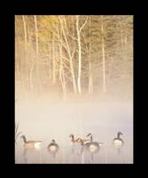 Foggy water Fowl by jesse-botanical