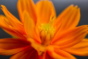 A Mid Focused Macro by dagia4all
