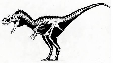Gorgosaurus scheletal scheme by SommoDracorex