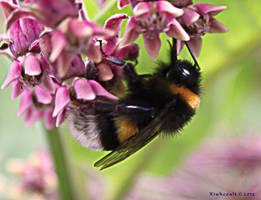 Bumblebee by Xiuhcoalt