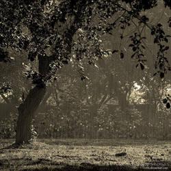 Summer Rain by rici66