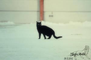 Black panther by Saiccu