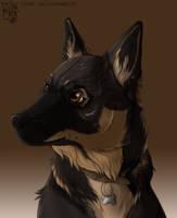 Swedish vallhund by Saiccu