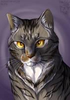 Cat portrait by Saiccu