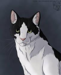Cat portrait 2 by Saiccu