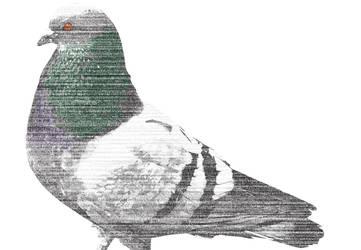 Digital Pigeon 8 by itharu