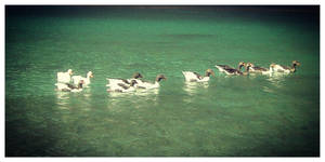 A duck family by loveautumnandnature