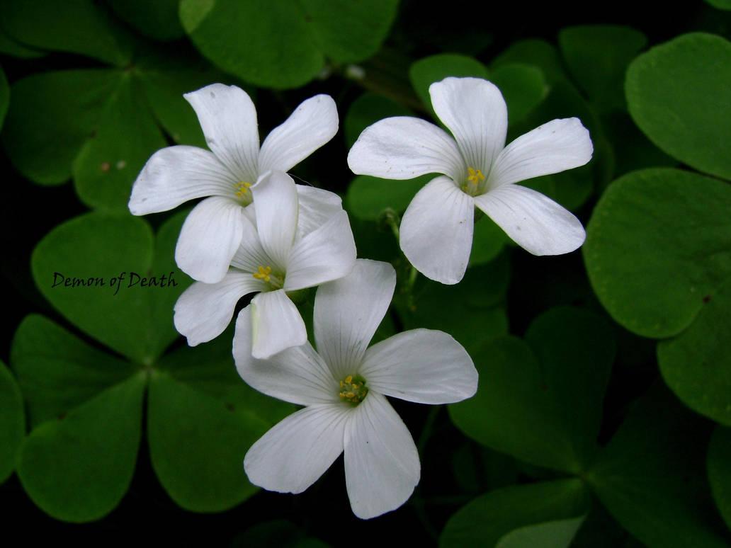 White Flowers By Demon Of Death 665 On Deviantart