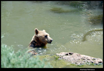 Syrian Brown Bear 10 by Demon-of-Death-665