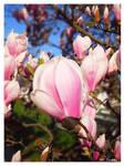 Magnolia by Villa-Chinchilla