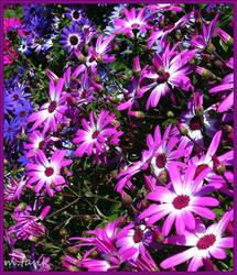 Purple and Pink Awakening by Villa-Chinchilla