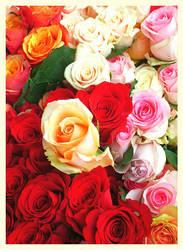 Roses - La vie en rose by Villa-Chinchilla
