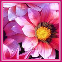Pink Blush by Villa-Chinchilla