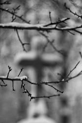 Thorns by piechot
