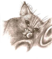 My sweet cat by Shabi000