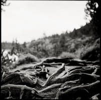 Roots - P6 by behherit