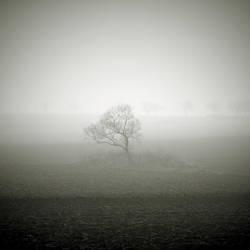 CCCXVII. ..in the fog XX. by behherit
