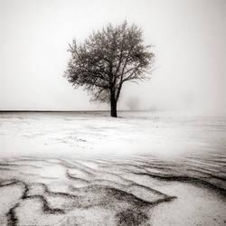 CCCXXI. ..Desolate Winter by behherit
