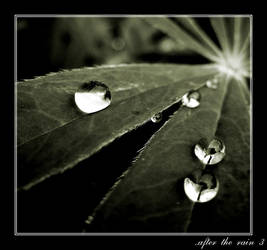 XXV. ..after the rain III. by behherit