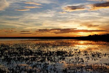 Camargue Sunset by Oaken-shield