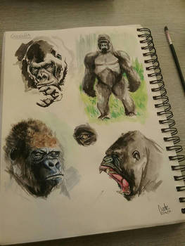 Gorilla studies by KieranMorris