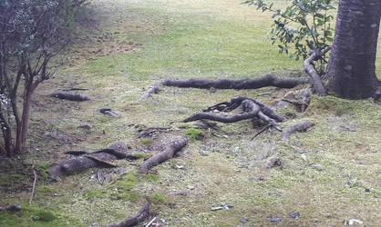 Roots or underground monsters surfacing? by SkullYukiru369