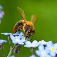 Busy bee by SasoSi