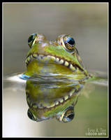 Frog Reflection by EricTonArts
