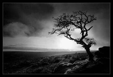 Still Lonely by didumdidum