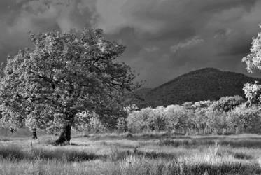 IR Tree II by Maetz