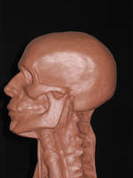 Anatomical Head Study - side 2 by AlfredParedes