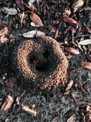 Happy anthill by kuroanime