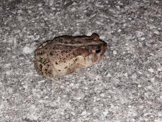 Toad by kuroanime