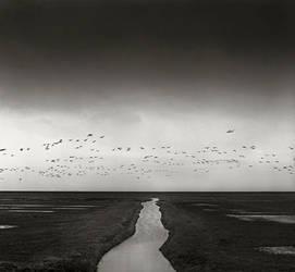 Flock of birds by giedriusvarnas