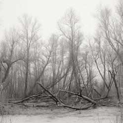 Fallen trees by giedriusvarnas