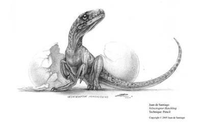 Raptor Hatchling by Red-Dilopho