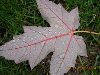 Stock-Leaf by AmyinWonderlandofOz