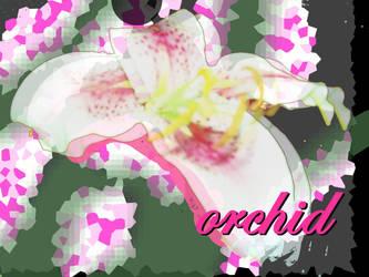 Digital Orchid by dvsprojekt