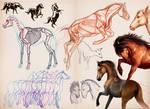 horse study set by Taikgwendo