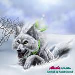 Brand-new Snow Coverage by ArnaTornwolf