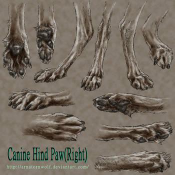 sketch - Canine Hind Paw by ArnaTornwolf