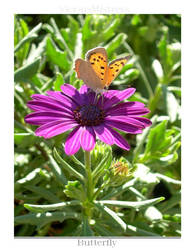 .:. Butterfly .:. by ViciousMistress