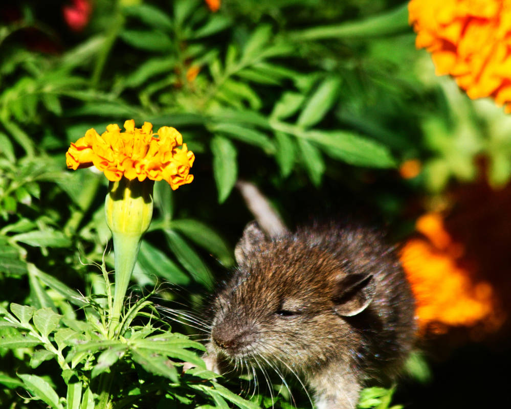 The Mouse's Garden by MoreThanNothing
