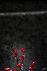 A Red Splash On A Dark Day by MoreThanNothing