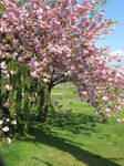 Beneath the Cherry Blossoms by GreenEyezz-stock