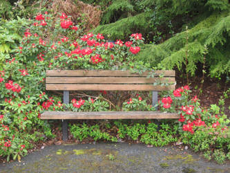 Flowers and Bench by GreenEyezz-stock